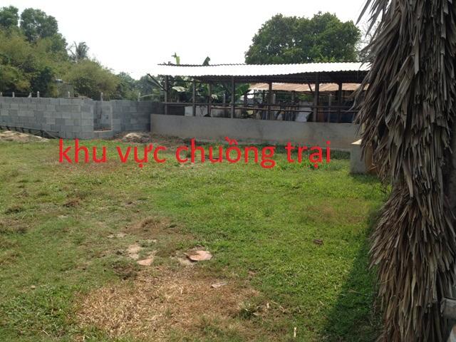 Bán  1.957m2 đất nhà vườn trang trại xã Phước Thạnh Củ Chi giá 550 triệu.